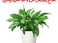طرح پرورش گل و گیاهان زینتی