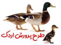 طرح پرورش اردک