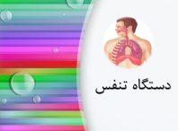 پاورپوینت دستگاه تنفس
