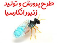 طرح پرورش و تولید زنبور انکارسیا