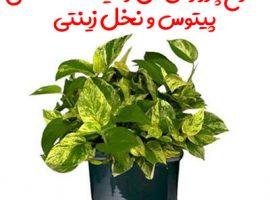 طرح پرورش گل و گیاه در گلخانه (پیتوس و نخل زینتی)