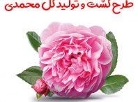 طرح کشت و تولید گل محمدی