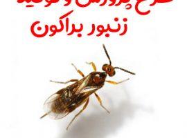 طرح پرورش و تولید زنبور براکون