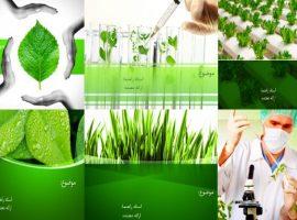 شش قالب پاورپوینت آماده برای رشته گیاه پزشکی