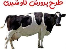 طرح پرورش گاو شیری