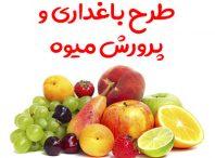 طرح باغداری و پرورش میوه