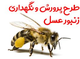 طرح پرورش و نگهداری زنبور عسل